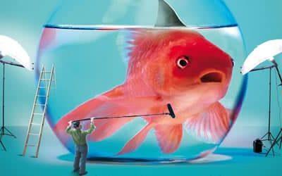 """Riuscirai a sconfiggere la famigerata """"attenzione del pesce rosso""""?"""