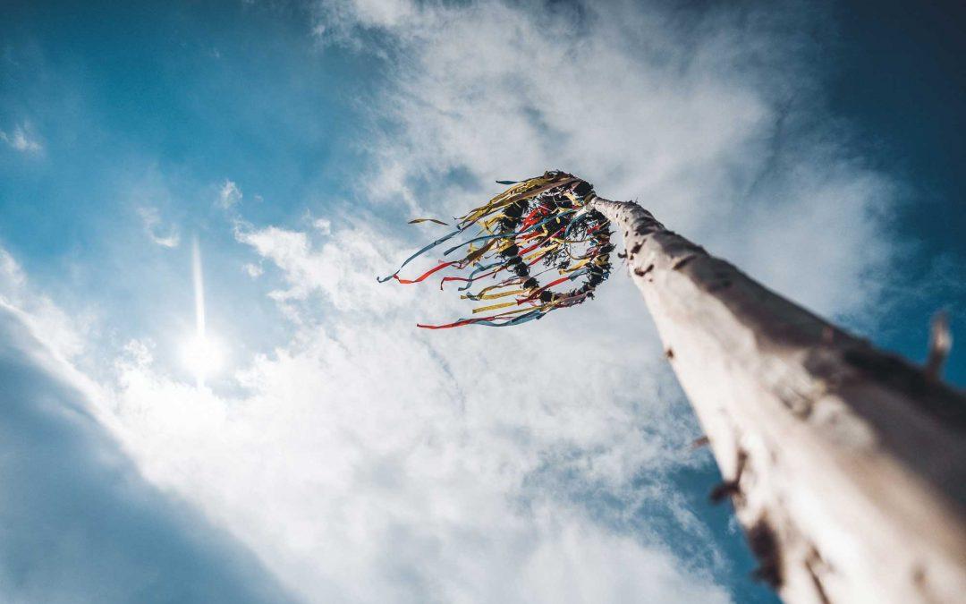 Social media e PMI: l'albero della cuccagna sta esaurendo i suoi frutti?